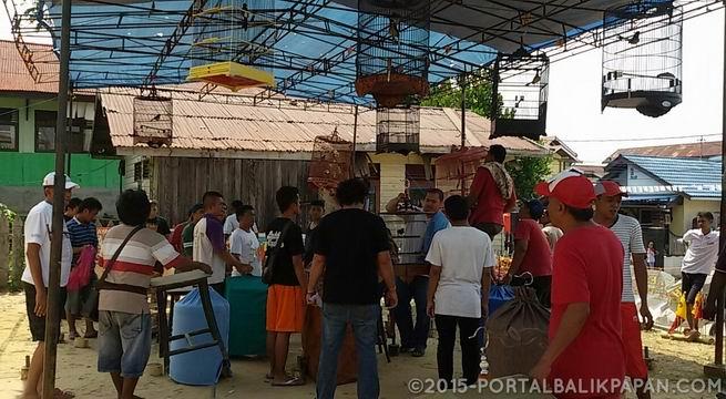 """Ratusan Burung Pleci """"Test Vocal"""" di Bonto Bulaeng"""